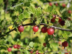 Frutos rojos, el deleite de la comarca Andina. Una propuesta apasionante para quienes deseen conocer los sabores de la Patagonia Argentina #CompartíArgentina.