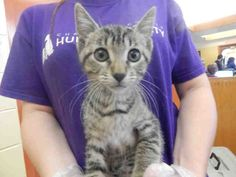 DONNA is available for adoption from @CUHumane #Urbana #Champaign #IL www.cuhumane.org PINNED 9/16/15 (CHAMPAIGN COUNTY HUMANE SOCIETY) Please click on the PET HARBOR link to see full BIO. Thanks.