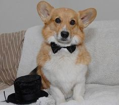 Dog Formal Wear Bow Ties