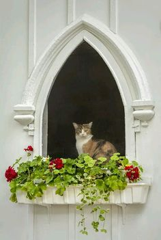Kitties love windows, especially with flowers. I Love Cats, Big Cats, Cool Cats, Cats And Kittens, Cat Window, Window Boxes, Window Sill, Crazy Cat Lady, Crazy Cats