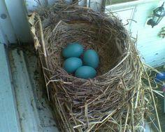 Birdnests