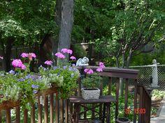 Part of the garden.....