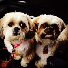 Show your support for Memphis Pets Alive! by voting for Bella and Buster Marr in the MPA!'s Furry Valentine