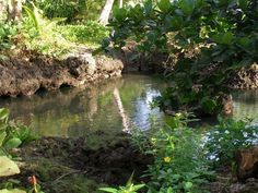 PIscina Natural $40 hotel named for the beautiful natural ​tide pool on the property. It ​is located on the  Caribbean Sea at Playa Negra, two ks from CAhuita