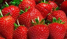 Strawberry picking time at Berryville Farm, LLC ~ Located between Racine and Kenosha in S.E. Wisconsin