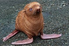 seals, russia, mothers, seas, red hair, logs, baby animals, gingers, island