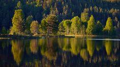 Alderängarna II - http://www.wildlifephotographer.se/blog/2016/06/alderangarna-ii/ #Alderängarna, #Dalälven, #Mora, #Sommar Wildlifephotographer.se | Leif Bength