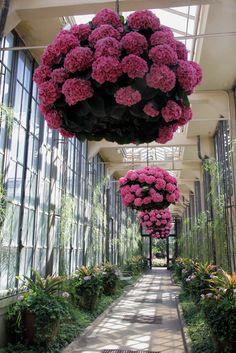 Hanging Flower Baskets, Hanging Planters, Unusual Flowers, Beautiful Flowers, Atrium Design, Sunken Garden, Dendrobium Orchids, Longwood Gardens, Fancy Houses