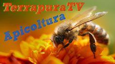31/10/13 - TerrapuraTV - Apicoltura: il mondo delle api visto da un apicoltore (Emiliano Bertolini). Produzione: USE TV http://www.weusetv.com Il mondo della api a 360 gradi: dal miele al polline, dal propoli alla mielata.   http://www.terrapura.com è uno dei negozi online di prodotti bio più forniti d'Italia ..date un'occhiata al nostro e-commerce e potrete toccare con mano la nostra qualità! http://www.weusetv.com