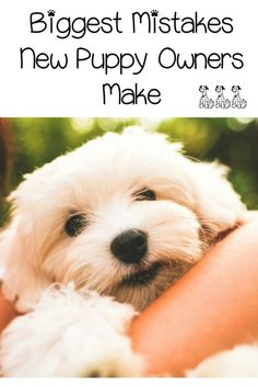 5 Biggest Mistakes New Puppy Owners Make - DogVills : Bringing a new family friend home? Check out these biggest mistakes that new puppy owners make & get the right start to training your dog! Puppies Tips, Cute Puppies, Dogs And Puppies, Spaniel Puppies, Doggies, Mini Puppies, Poodle Puppies, Retriever Puppies, Pet Dogs