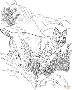 Canada Lynx Coloring Page From Bobcats Category Select 27278 Printable Crafts Of Cartoons Nature Animals Bible And Many More