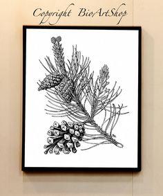 black pine pinus nigra L. by BioArtShop on Etsy