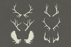 antlers - Google Search