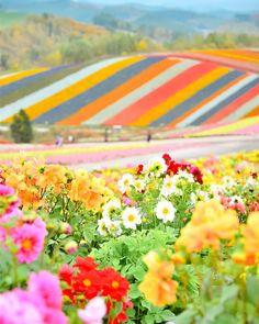 Panoramic Flower Gardens Shikisai-no-oka, Biei, Hokkaido, Japan, Beautiful Places To Visit, Beautiful World, Beautiful Gardens, Belleza Natural, Japan Travel, Beautiful Landscapes, Champs, Wonders Of The World, Mother Nature