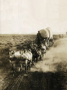 Covered Wagons on the Plains Going West by Bettmann