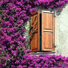 Piante rampicanti: 8 idee per giardino e balcone Terrazzo, Home Decor, Fantasy, Interior Design, Home Interior Design, Home Decoration, Decoration Home, Interior Decorating
