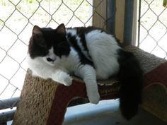 Blind Cat Rescue - Ray