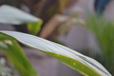 Nature Nature, Plant Leaves, Plants, Garden, Garten, Planters, Gardening, Outdoor, Home Landscaping