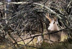 Find These 6 Types of Deer Beds to Zero In On Big Bucks | Field & Stream