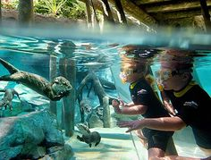 A guide to visiting #DiscoveryCove in Orlando