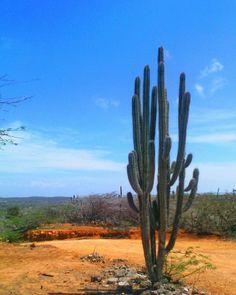 #comparte @angelikpuertas Árido... Caserío Maitiruma - Península de Paraguaná (Edo. Falcón). #igersfalcon #igers #photo #photography #haztenotar #comparte #sky #skyporn #sand #clouds #instagood #instalike