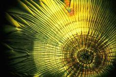 Vitamin C Microscopic Photography