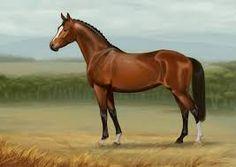 Resultado de imagen para paisajes con caballos salvajes