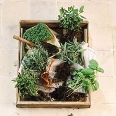 Many herbs can be planted in the same container provided there is enough root space.