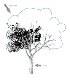 """""""How to Draw a Realistic Tree"""" Sketchbooknation.com (for full tutorial)"""