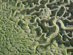 """Armonia fractal de Doñana y las marismas - YouTube - Have heard our lives here on earth described as """"fractals when viewed from above"""" (thank you author of The Shed). This rabbit trail dwindling? Just take another :^D"""