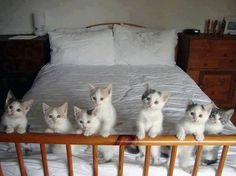Adopt cats and kittens from shelters and rescues. Donate time, money or supplies to local animal rescue groups.