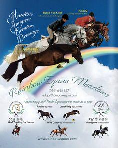 Rainbow Equus Meadows