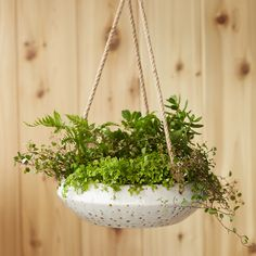 Handmade from durable earthenware, this shallow bowl planter is suspended from a length of rustic, jute rope.- Earthenware, jute rope- Indoor use only Outdoor Planters, Hanging Planters, Indoor Garden, Indoor Plants, Herb Pots, Garden Terrarium, Plant Shelves, Planter Boxes, Earthenware