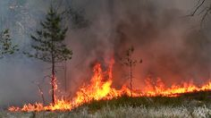 Forest Fire Fire And Thick Smoke Destroy Wild Forest. The Wind . Wild Forest, Alpha Channel, Photo Illustration, Ecology, Stock Video, Stock Footage, Art History, Wilderness, Art Reference
