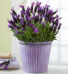 The classic look and smell of lavender is a cornerstone to any summer decoration.