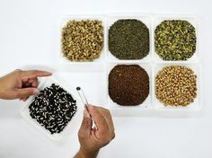 Samples of forage seeds in the International Center for Tropical Agriculture gene bank recently sent to the Global Seed Vault in Svalbard, Norway.