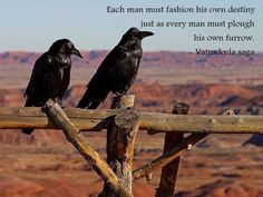 Ravens and Crows in Mythology, Folklore and Religion :: Perspectives The Crow, Boutique Zen, Le Totem, Dawn Of The Planet, Raven Bird, Legends And Myths, Jackdaw, Crows Ravens, Deities