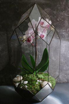 Флорариум Пуля с орхидеей