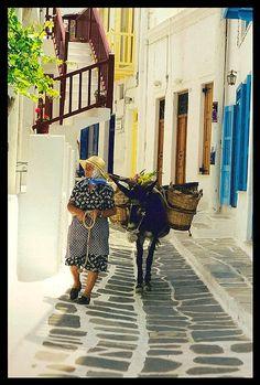 The old lady and the donkey - Mykonos Town, Greece * Tia had the nicest flowers. I miss Mykonos Mykonos Town, Mykonos Greece, Crete Greece, Athens Greece, Santorini, Beautiful Islands, Beautiful World, Animals Beautiful, Zorba The Greek