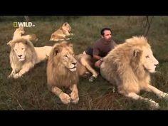 Amazing Lion Ranger Kevin Richardson 3 3 Nature Wildlife Documentary 480p [Full Documentary 2015] - YouTube