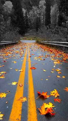 Fall the most beautiful season of the year!