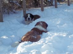 Bowzer and Besse playing in the snow
