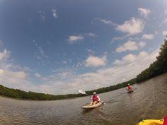 Kayaking FLA Mangroves