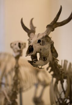 #Skeletons
