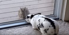 Wild Rabbit Spots Pet Bunny, Falls Madly In Love - The Dodo