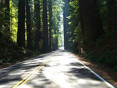 """The Avenue of the Giants, in Northern California. Added to the """"to cycle through"""" list."""
