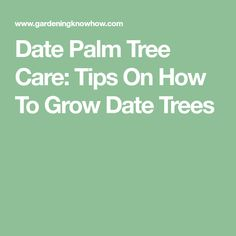 Date Palm Tree Care: Tips On How To Grow Date Trees