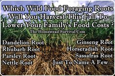 Wild Food Foraging - The Homestead Survival -  http://thehomesteadsurvival.com/roots-harvest-fall/