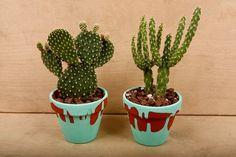 Cacti, flower pots