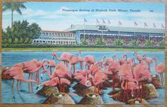 vintage florida flamingo postcard pictures | Group of 3 Vintage Flamingo Postcards, Fun Antique Florida Tropical ...